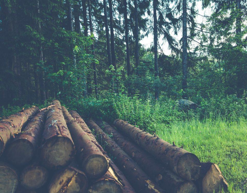 benefici arredi in legno
